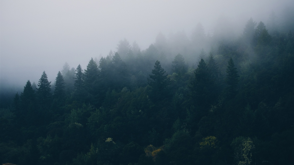 forest_trees_fog_110131_1920x1080
